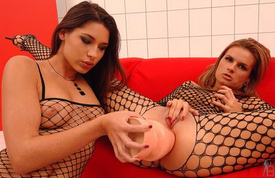 Sexy and exquisite brunette hair in fishnet nylons is drill her dears cunt with sextoy